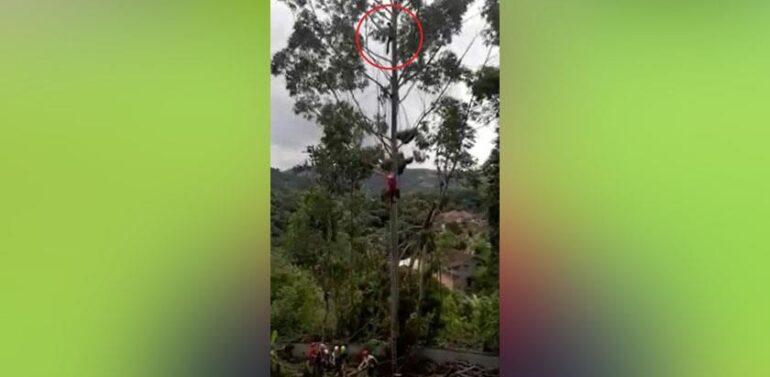 VÍDEO : Homem pendurado em árvore é resgatado pelo Helicóptero