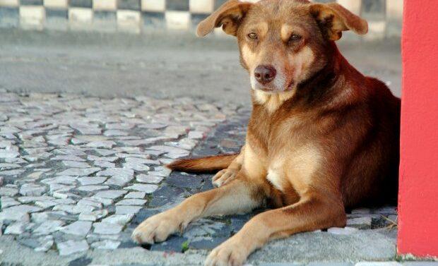 Alesc aprova projeto de controle populacional de animais domésticos