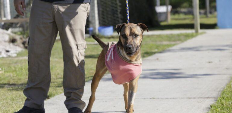 Feira virtual de adoção do Centro de Bem-Estar Animal agora é permanente