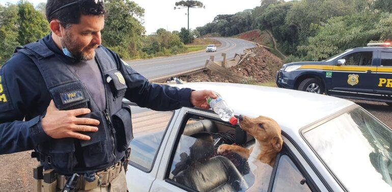 Cães abandonados em veículo acidentado recebem água e comida na BR 282