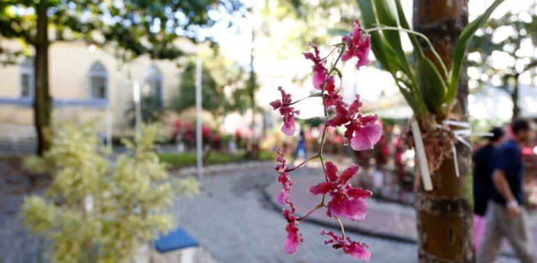 Jardim do Hospital São José é embelezado com orquídeas