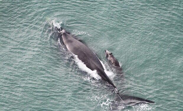 Sete baleias dão show no litoral norte no final de semana