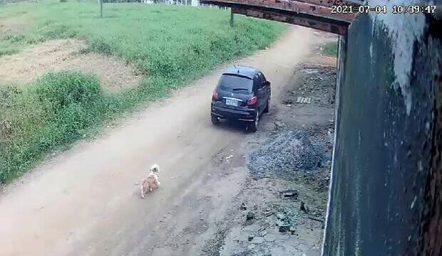 Cachorro corre atrás de dono após ser abandonado em via pública