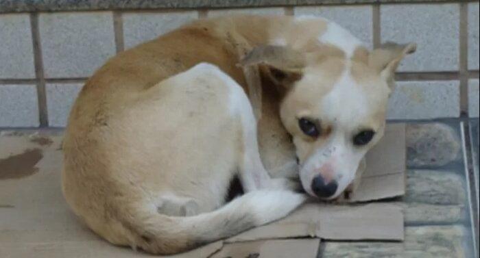 MP-SC recomenda que animais em vulnerabilidade sejam protegidos do frio em Joinville