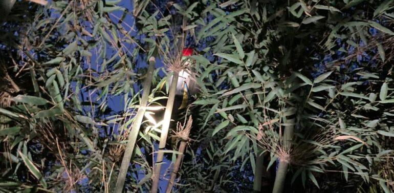Homem fica pendurado em galhos de árvores após saltar de parapente