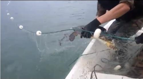 Polícia Ambiental apreende 3 mil metros de redes ilegais entre Itapoá e Barra Velha