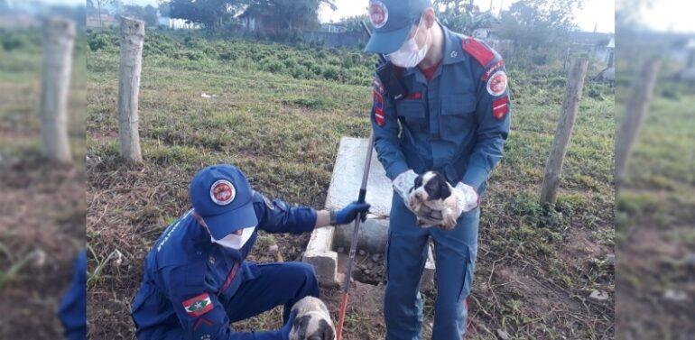 Bombeiros resgatam cachorro preso em tubulação de esgoto