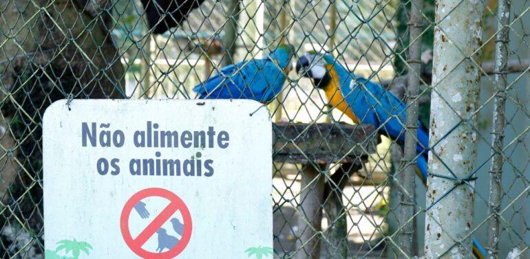 Zoobotânico alerta visitantes sobre riscos de alimentar os animais