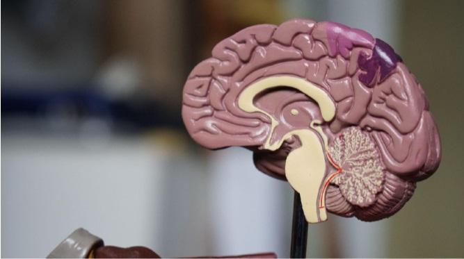 Exercícios para o cérebro garantem a saúde mental
