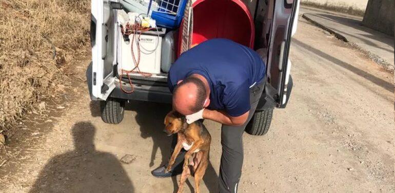 Cachorro é agredido a marteladas em Barra do Sul