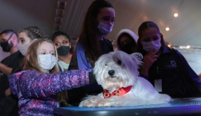Dog Dance Day promove atividades especiais para os pets
